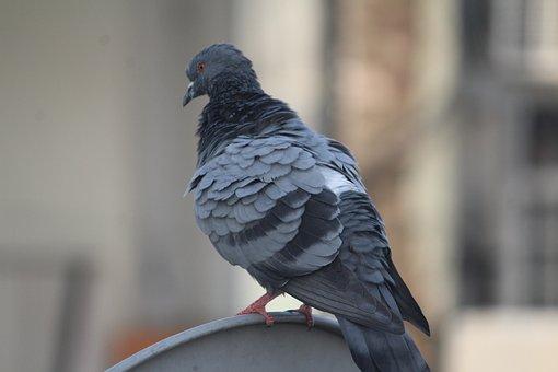 Pigeon, Warming Up, Bird, Domestic Pigeon