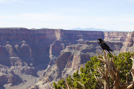 Crow, Grand Canyon, Grand, Canyon, National, Nature