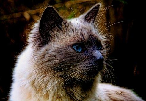 Cat, Pet, Furry, Animal, Cute, Domestic, Feline
