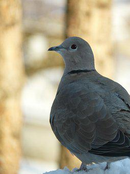 Dove, Bird, Peace Of Mind, Reflection, Profile