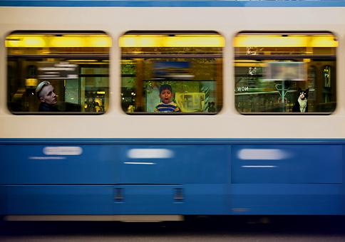 Train, Horror, Scary, Boy, Cat, Help, City, Animal