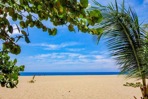 Beach, Caribbean, Sea, Antigua, Palm Trees, Maldives