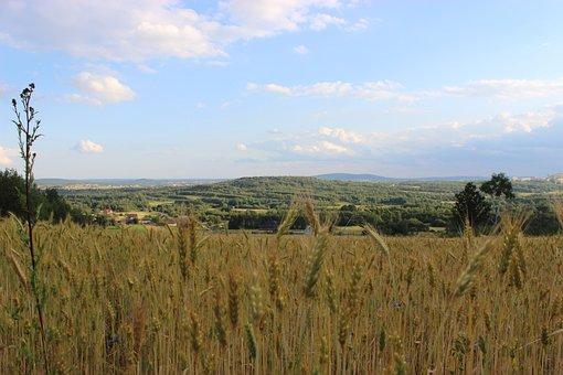 Field, Corn, Village, Poland, Wild Grain, Sunny, Nature