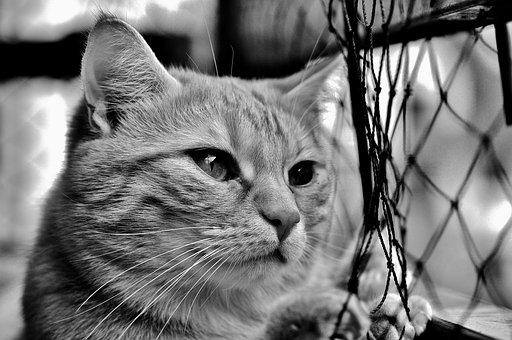 Cat, Mackerel, Longing, Web, Wait, Red, Tiger Cat