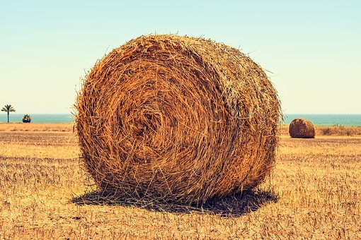 Hay Bale, Field, Agriculture, Rural, Farming, Farm