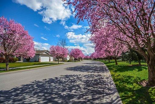 Neighborhood, Subdivision, Street, Tree, Lined, Road