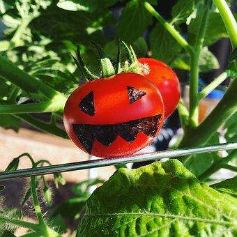 Mini Tomato, Dwarf Tomatoes, The Label