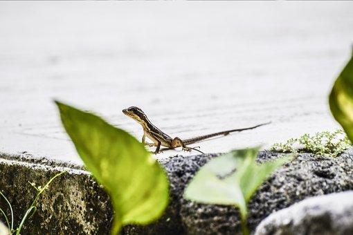 Animal, Lizard, Reptile, Small, Gecko