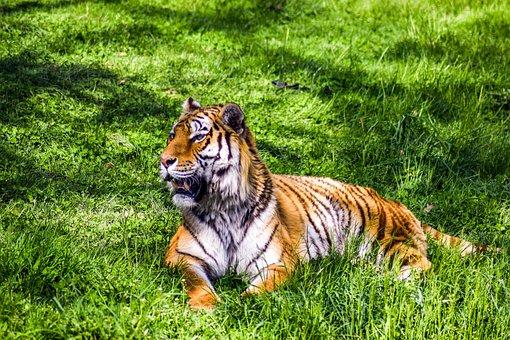 Zoo, Paugres, Ardeche, Animals, Visit, Holiday