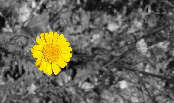 Yellow, Solar, Color, Daisy, Blonde, Focus, Attractive