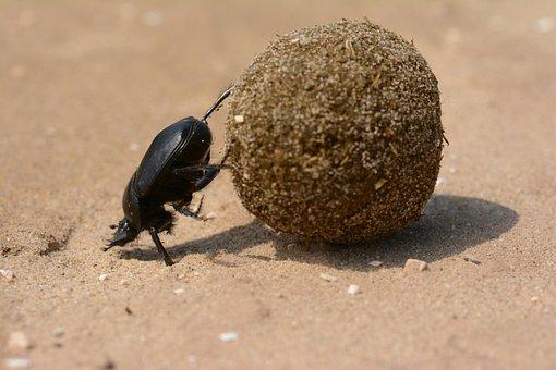 Scarab, Beetle, God, Dung Beetle, Italy, Sisyphus