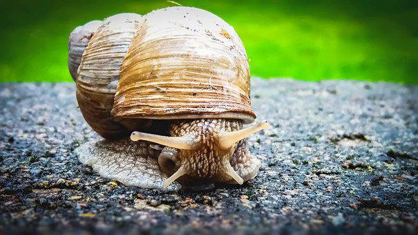 Snail, Animal, Plazivé, House, Nature