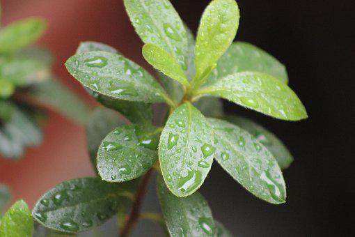 Plant, Rain, Nature, Water, Leaf, Garden, Green, Dew