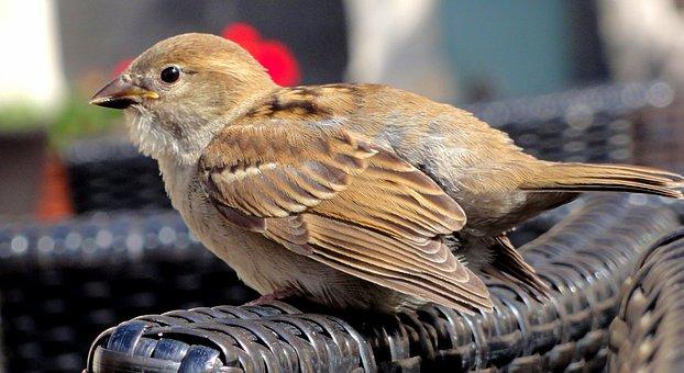 The Sparrow, Sparrow Home, Sparrow Common, Bird