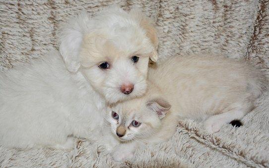 Dog Cat, Canine, Complicity, Feline, Tenderness, Pets