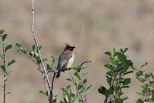 Bird, Montana, Wildlife, Bison Range, Prairie Bird