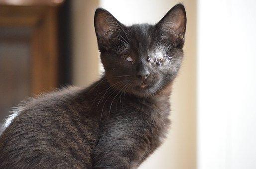 Blind, Animal Welfare, Cat, Live, Animals