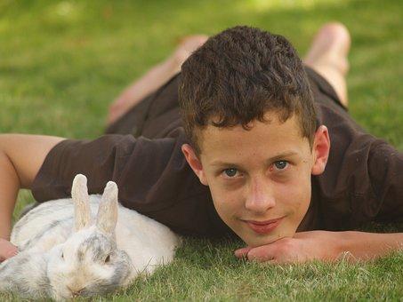Pets, Rabbit, Hare, Dwarf Rabbit, Nager, Long Eared