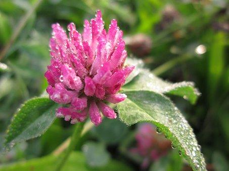 Blossom, Bloom, Garden, Flora, Dalia, Plant, Flower