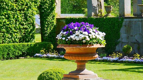 Flowers, Shell, Decoration, Flower Bowl, Summer