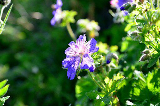 Nature, Flower, Plant, Spring Flowers, Green