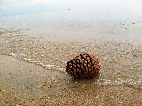Pine Cone, Shore, Beach, Lake, Water, Sand, Nature