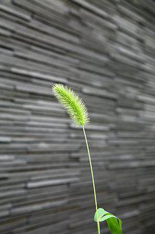 Plants, Weeds, Wall, New Life, Pool, Concentration