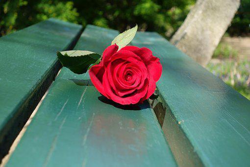 Red Rose, Green Bench, Romantic, Romance, Love