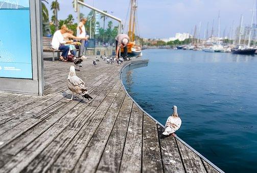 Barcelona, Bird, Seagull, Pigeon, Mediterranean, Sea