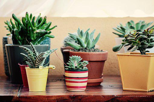 Fat Plants, Terrace, Garden, Summer, Spring, Vase