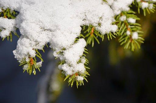 Fir, Branch, Snow, Green, Needles, Winter, Pine Needles