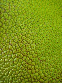 Jack Jackfrucht, Green, Large, Delicious, Fruit