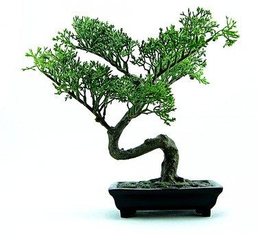Bonsai, Tree, Green, Plant, Small, Nature, Pot