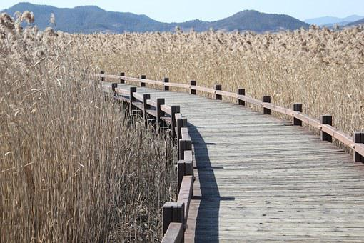 Reed, Curve Method, Wooden Path, Heeled Is, Nature