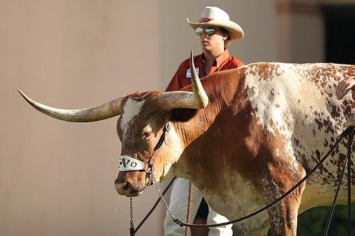 Mascot, Sports, Texas, Longhorn, Cowboy, Wrangler