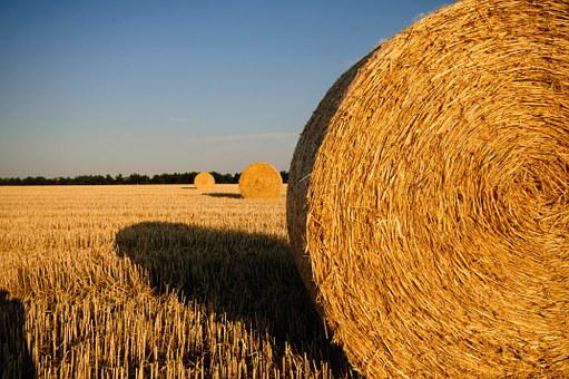 Straw Bales, Stubble, Summer, Straw, Field, Harvested