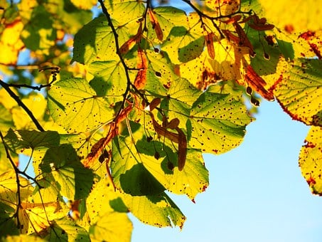 Leaves, Autumn, Sunny, Colorful, Fall Color