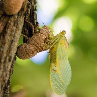 Birth, Cicada, Windmill Gard, Chrono 522, Nature
