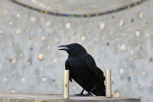 Animal, Park, Bench, Crow, Wild Birds, Wild Animal