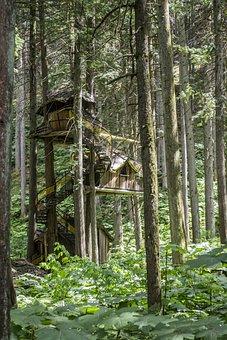 Tree, House, Treehouse, Unique, Jungle, Story, Home