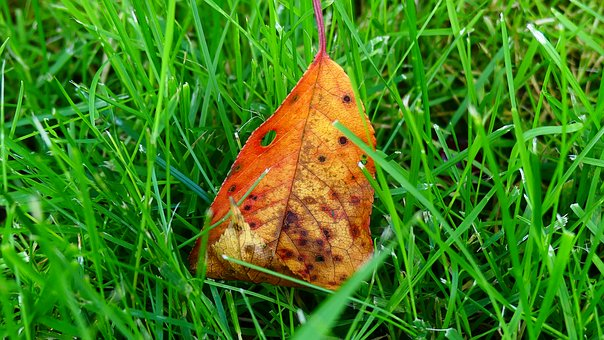 Sheet, Green, Grass, Contrast, Nature, Leaves, Plant