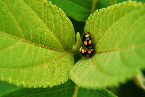 Insects, Reproduction, Leaves, Bugs, Microphotographing