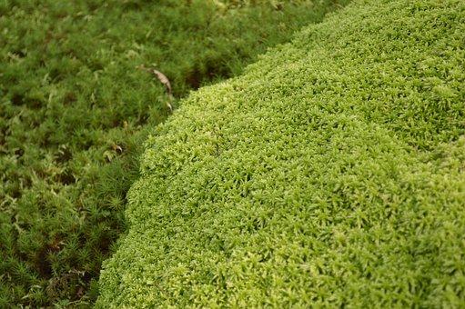 Moss, Grass, Green, Texture, Japan, Plant, Natural