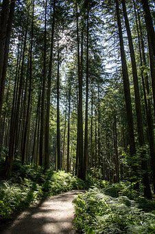 Forest, Path, Magic, Magical, Nature, Natural, Trees