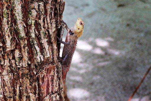 Tree, Lizard, Animal, Reptile, Nature, Natural