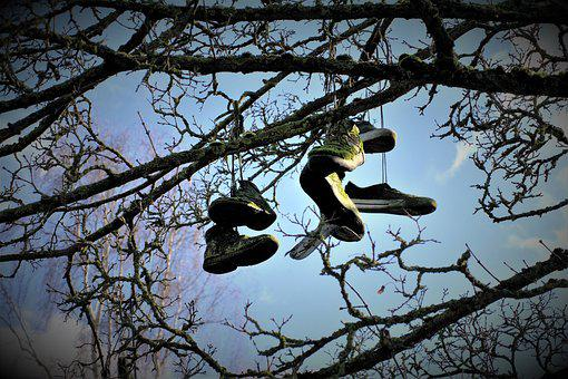 Shoe, Tree, Skaters, Heaven, Air