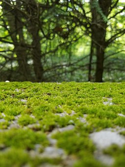 Moss, Green, Trees, Nature, Stone, Mossy Stone