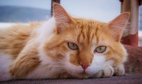 Cat, Cute, Adorable, Pet, Animal, Kitten, Domestic