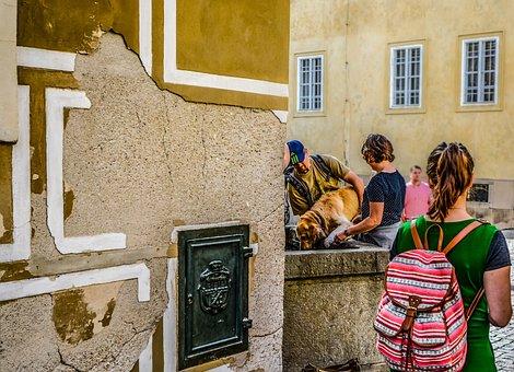 Prague, Fountain, Dog, Drink, Animal, Pet, Owners