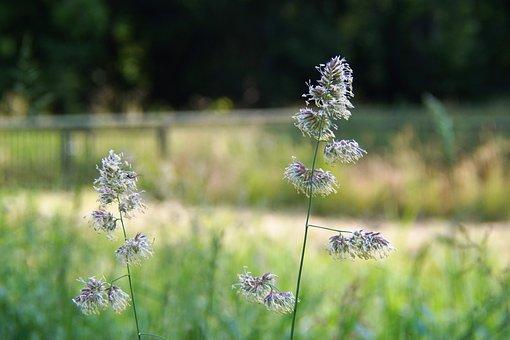 Flower, Nature, Berm, Bloom, Spring, Flowers